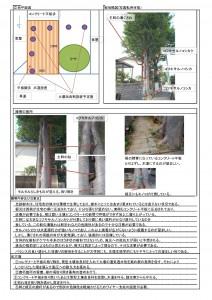 菊島邸ケヤキ診断書.処方箋xls_ページ_3